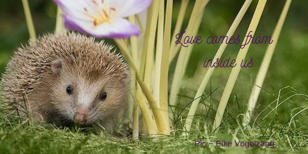 Porcupine by flower with the message ~ Love comes from inside us.